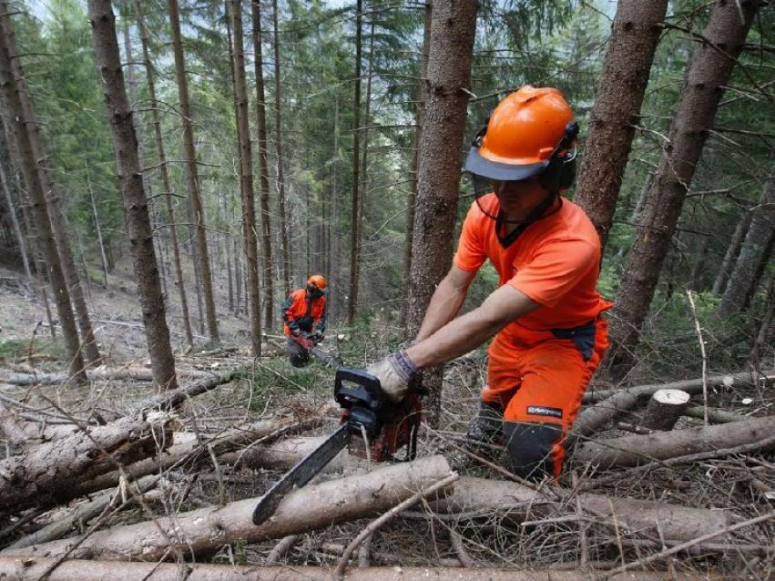 Copertina dell'articolo: Buone nuove per i 5000 dipendenti dell'Agenzia Forestale della Regione Sardegna